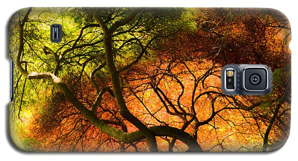 Galaxy S5 Case featuring the photograph Japanese Maples by Angela DeFrias