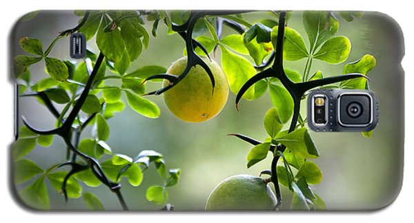 Galaxy S5 Case featuring the photograph Japanese Orange Tree by Farol Tomson