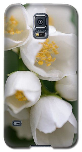 Jasmin Flowers Galaxy S5 Case