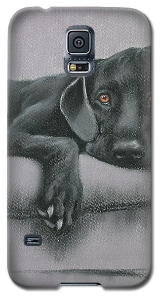 Galaxy S5 Case featuring the drawing Jasper by Cynthia House