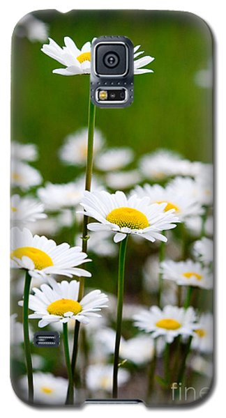 Jasper - Oxeye Daisy Wildflower 2 Galaxy S5 Case
