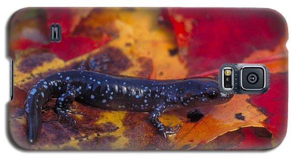 Jefferson Salamander Galaxy S5 Case by Paul J. Fusco