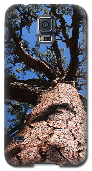 Jeffrey Pine Galaxy S5 Case
