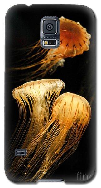 Jellyfish Trio Floating Against A Black Galaxy S5 Case