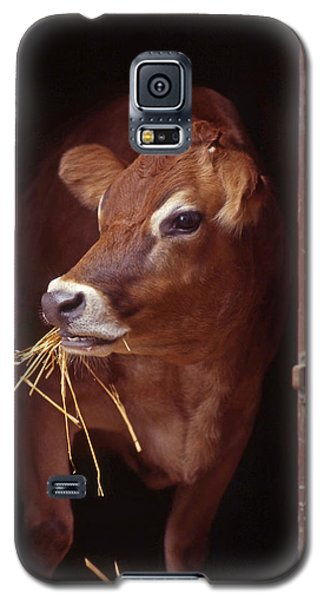 Jersey Cow Galaxy S5 Case
