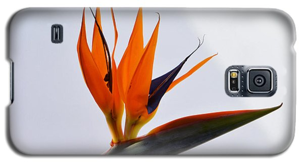 Jewel Of The Tropics. Galaxy S5 Case by Terence Davis