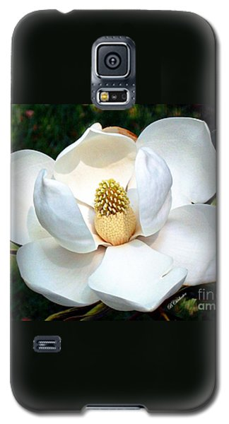 Galaxy S5 Case featuring the photograph John's Magnolia by Barbara Chichester