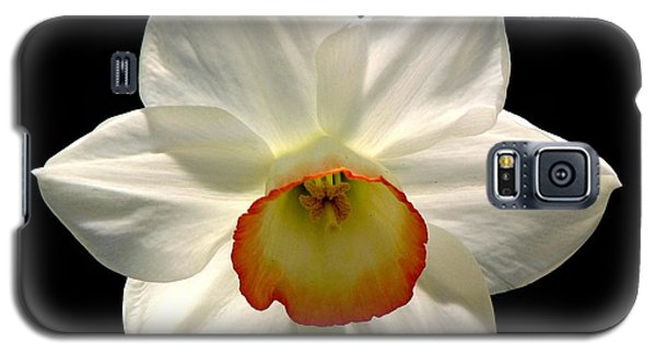 Galaxy S5 Case featuring the photograph Jonquil 1 by Rose Santuci-Sofranko