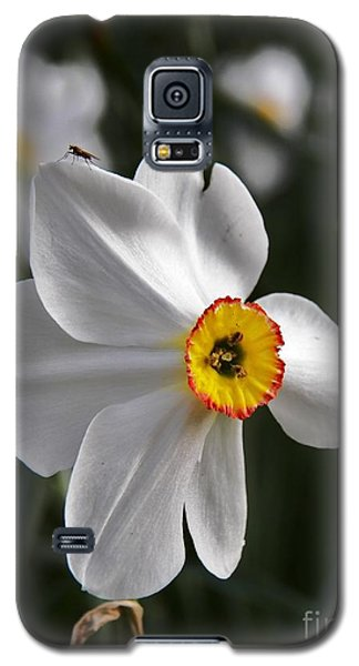 Galaxy S5 Case featuring the photograph Jonquil by Judy Via-Wolff