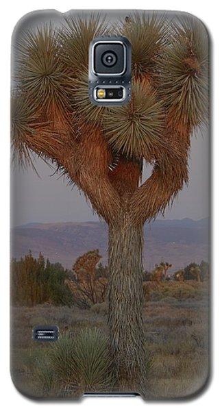 Joshua Tree And Harvest Moon Setting Galaxy S5 Case