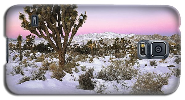 Joshua Tree In Snow Galaxy S5 Case