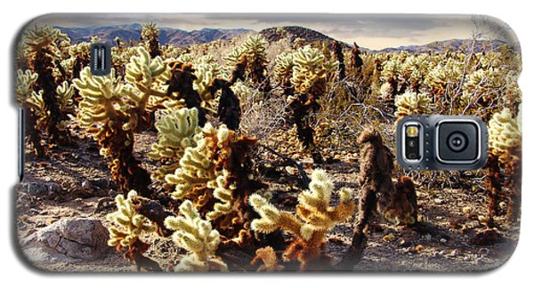 Joshua Tree National Park 3 Galaxy S5 Case by Glenn McCarthy Art and Photography