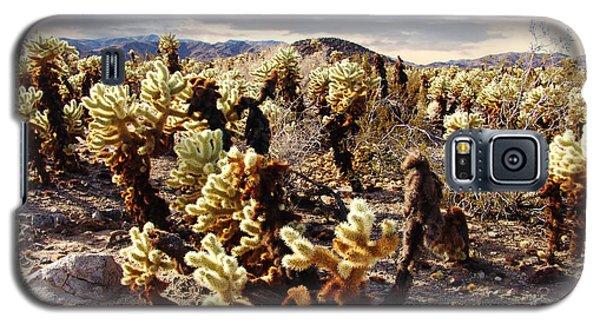 Joshua Tree National Park 3 Galaxy S5 Case