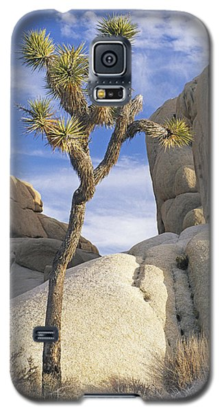Joshua Tree Np  Galaxy S5 Case