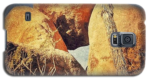 Sunny Galaxy S5 Case - Joshua Tree Np by Jill Battaglia