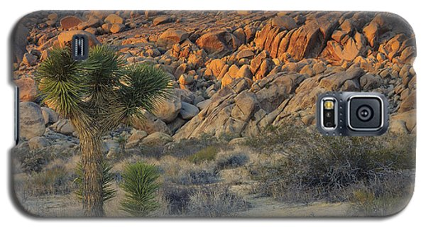Joshua Tree With Offsrping Galaxy S5 Case