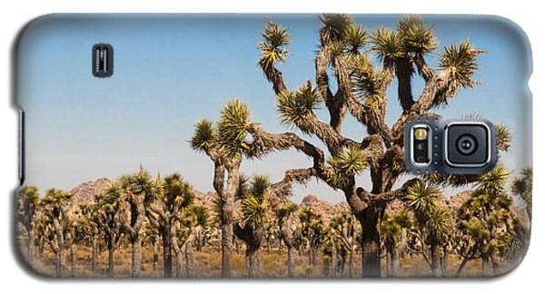 Galaxy S5 Case featuring the photograph Joshua Trees  by Penny Lisowski