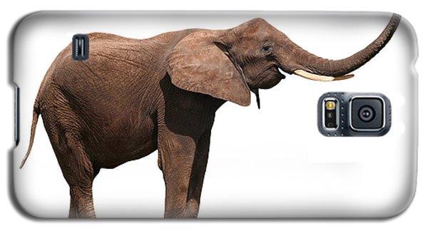 Joyful Elephant Isolated On White Galaxy S5 Case