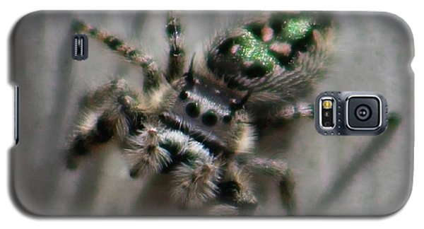 Jumping Spider Galaxy S5 Case