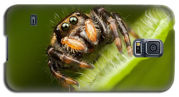Jumping Spider Phidippus Clarus I Galaxy S5 Case