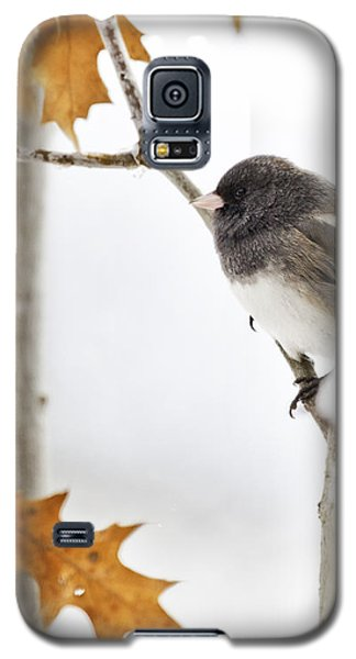 Junco And Oak Galaxy S5 Case