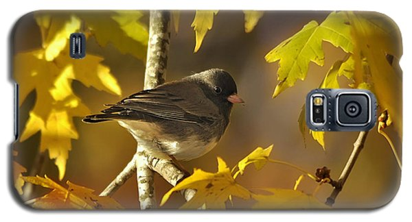 Junco In Morning Light Galaxy S5 Case by Nava Thompson