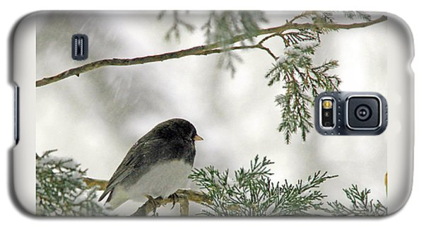 Galaxy S5 Case featuring the photograph Junco In Snowstorm by Paula Guttilla