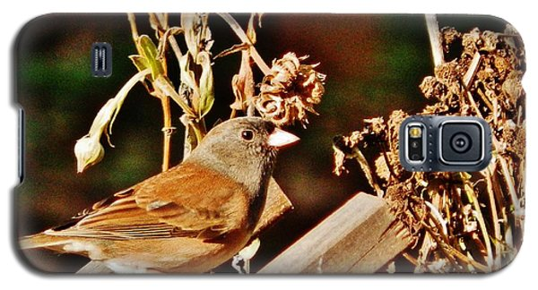 Galaxy S5 Case featuring the photograph Junco Jaunt 2 by VLee Watson