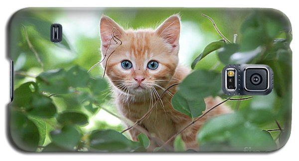 Jungle Kitty Galaxy S5 Case