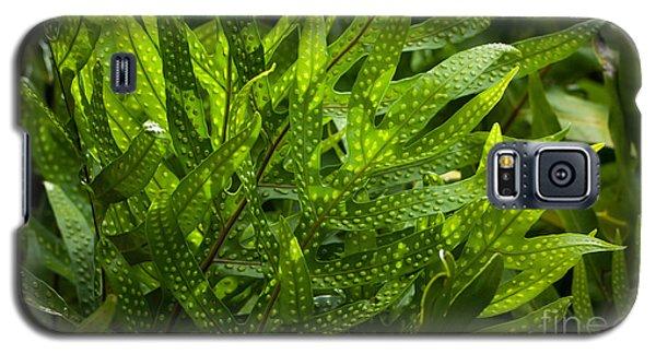 Jungle Spotted Fern Galaxy S5 Case