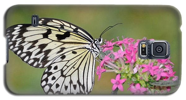 Just A Sip - White Tree Nymph Galaxy S5 Case