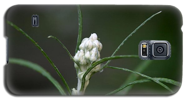 Galaxy S5 Case featuring the photograph Just Budding by Denyse Duhaime