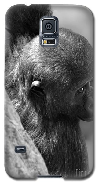 Galaxy S5 Case featuring the photograph Just Hang'in  by Adam Olsen