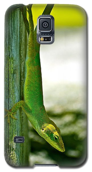 Just Hanging... Galaxy S5 Case by Lehua Pekelo-Stearns