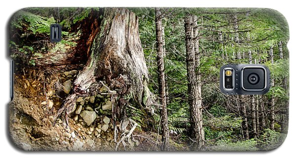 Just Hanging On Old Growth Forest Stump Galaxy S5 Case