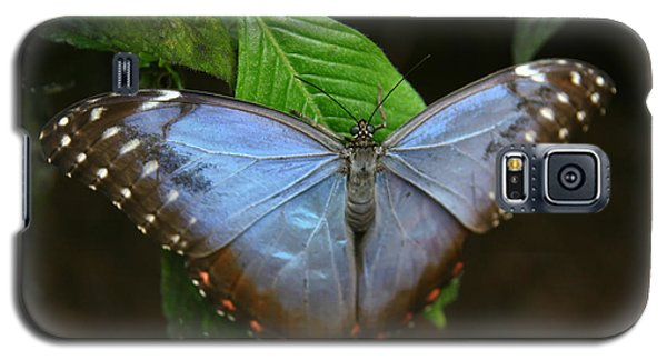 Just Hanging On Galaxy S5 Case by Denyse Duhaime