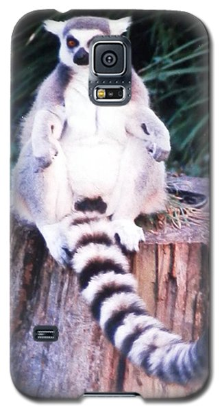 Handsome Lemur Just Hanging Out Galaxy S5 Case by Belinda Lee