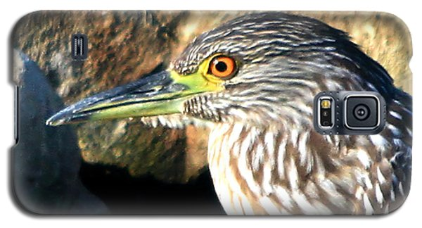 Juvenile Black Crowned Night Heron Galaxy S5 Case