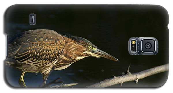 Juvenile Green Heron Galaxy S5 Case