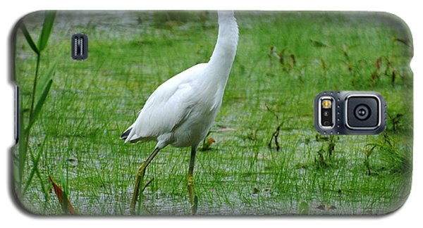 Juvenile Little Blue Heron In Search Of Food Galaxy S5 Case