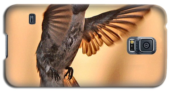 Juvenile Male Anna's In Flight Galaxy S5 Case by Jay Milo