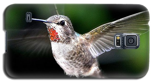 Juvenile Red Thoated Hummingbird Galaxy S5 Case by Jay Milo