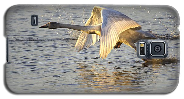 Juvenile Whooper Swan Taking Off Galaxy S5 Case