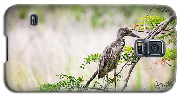 Galaxy S5 Case featuring the photograph Juvenile Yellow Crowned Night Heron by Zoe Ferrie
