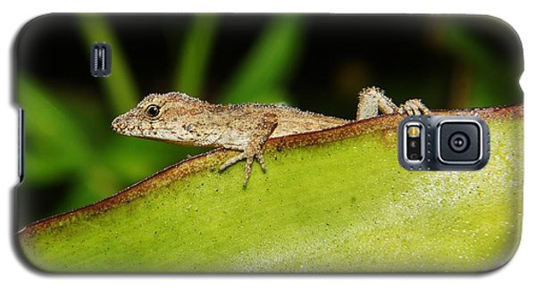 Juvie Brown Anole Galaxy S5 Case by Lynda awson-Youngclaus
