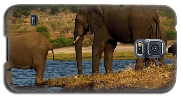 Galaxy S5 Case featuring the photograph Kalahari Elephants Preparing To Cross Chobe River by Amanda Stadther