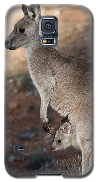 Kangaroo And Joey Galaxy S5 Case
