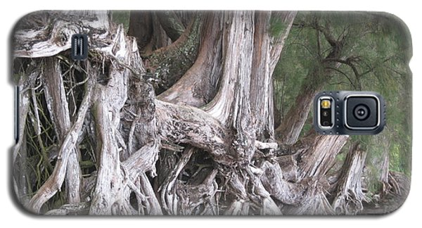 Galaxy S5 Case featuring the photograph Kauai - Roots by HEVi FineArt