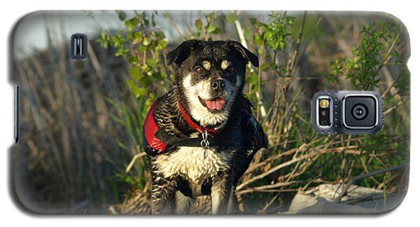 Galaxy S5 Case featuring the photograph Kayaker's Best Friend by James Peterson