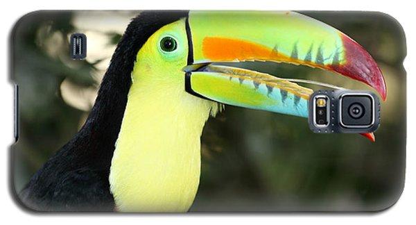 Keel Billed Toucan Galaxy S5 Case